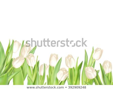 természetes · zöld · szelektív · fókusz · égbolt · fény · terv - stock fotó © beholdereye