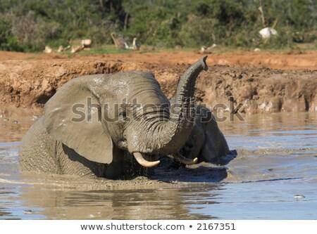 Afrikai elefánt szórakozás víz úszik park Dél-Afrika Stock fotó © simoneeman