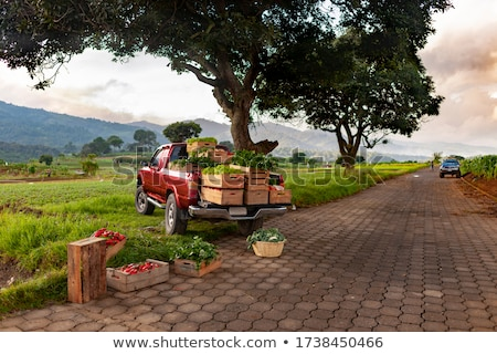 Stock photo: Pickup Truck Tomato