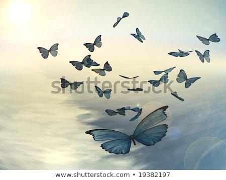 flock of pastel butterflies Stock photo © blackmoon979