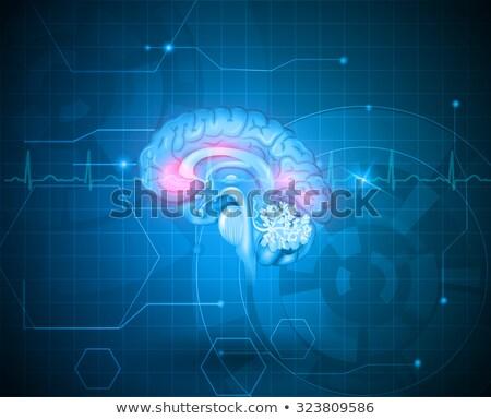 Human brain treatment concept. Abstract blue technology backgrou Stock photo © Tefi