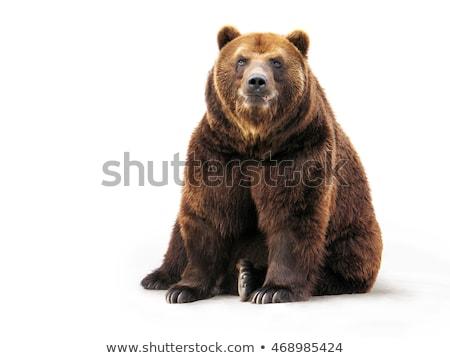 Grizzly medve fehér illusztráció mosoly művészet vicces Stock fotó © bluering