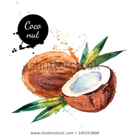 Akwarela ilustracja Kokosowe całość kawałek Zdjęcia stock © Sonya_illustrations