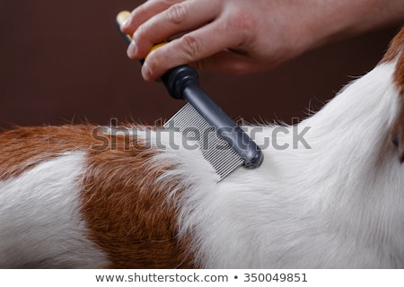 Woman brushing her dog stock photo © IS2