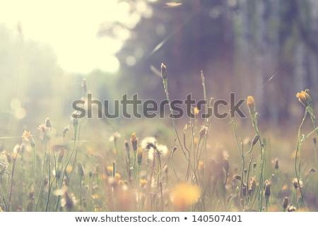 Flores da primavera prado floresta montanha beleza Foto stock © Kotenko