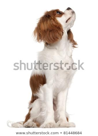 Yandan görünüş meraklı köpek yavrusu oturma beyaz Stok fotoğraf © feedough