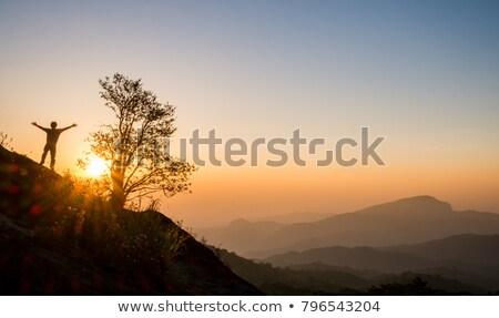misty · forêt · jour · sunrise · brumeux - photo stock © pozn