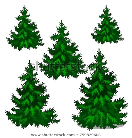 The set of stages of growing spruce or Christmas tree isolated on a white background. Vector cartoon Stock photo © Lady-Luck