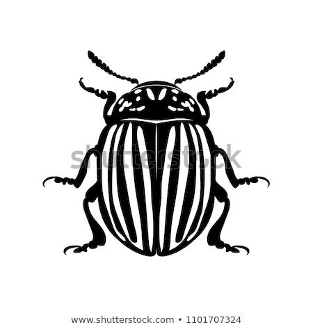 Colorado besouro ícone cor projeto natureza Foto stock © angelp