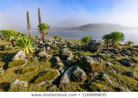 Gigante fardo montanha etíope montanhas paisagem Foto stock © artush