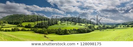 Panorama wales hoog heuvels bergen Stockfoto © backyardproductions