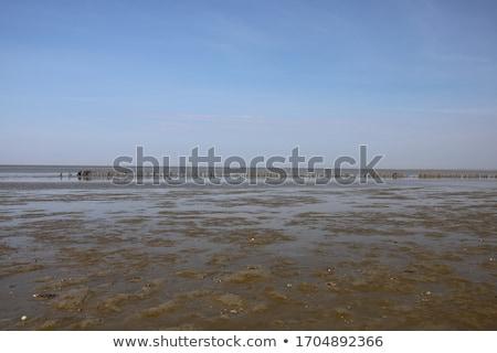 Alacsony árapály homokos tengerpart türkiz tenger Krabi Stock fotó © timbrk