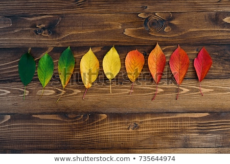 colorful rainbow gradient with group of leafs stock photo © boroda