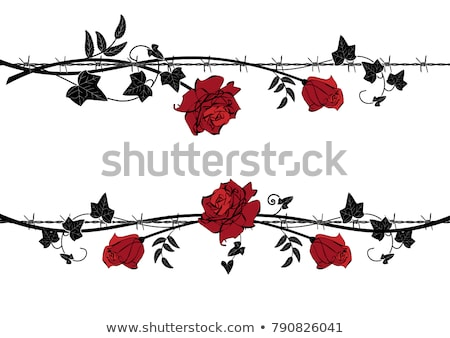 Barbed wire with ivy Stock photo © sahua