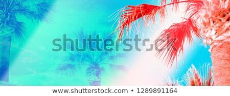 pálmafa · korall · Vörös-tenger · víz · iskola · pálma - stock fotó © stephankerkhofs