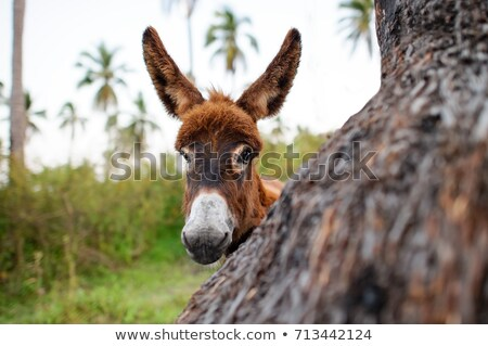 curious donkey stock photo © taviphoto