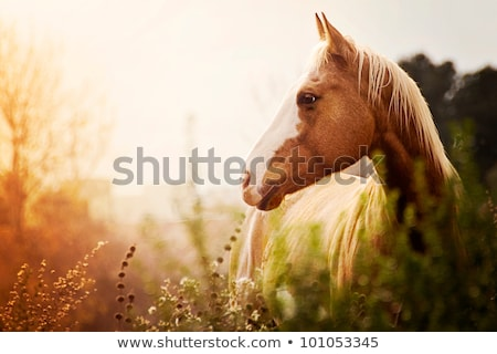 cheval · crépuscule · portrait · soleil · photo - photo stock © nature78