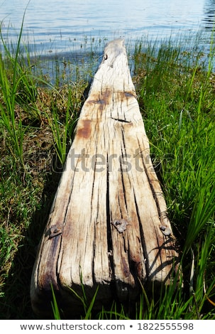 Landscape old rotten columns in lake Stock photo © Zhukow