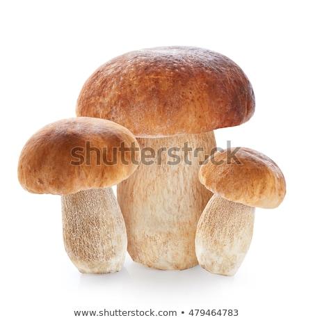 Boletus isolato bianco foresta vegetali funghi Foto d'archivio © shutswis