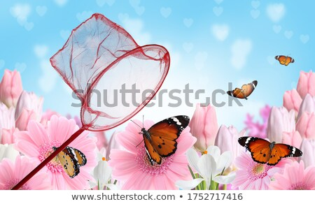 Butterfly Catcher Stock photo © cteconsulting