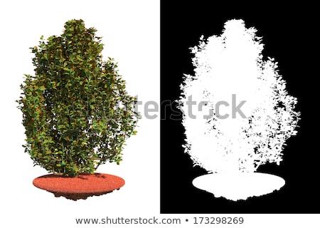 Bokor részlet maszk fű izolált fehér Stock fotó © tashatuvango