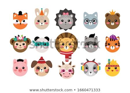 bonitinho · crânios · animais · rabino · gato · tenha - foto stock © ansy