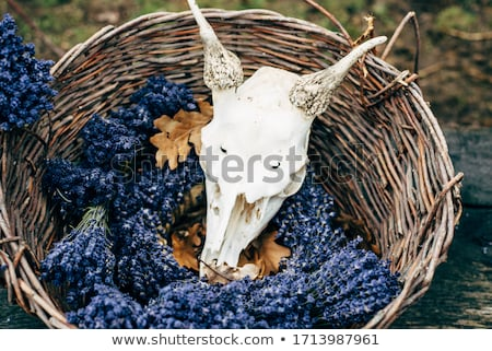 Lavender bunches in woven baskets.  Stock photo © belahoche