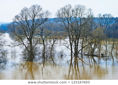 spring floods in small river stock photo © 5xinc