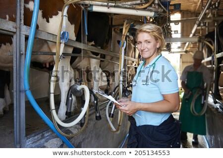 Veteriner sığırlar iş kadın gıda adam Stok fotoğraf © HighwayStarz
