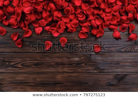 Red rose on dark wood background Stock photo © Sportactive