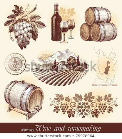 Hand drawn vector set - wine and winemaking Stock photo © netkov1