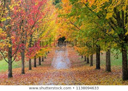 осень · долины · фотография · поход · холодно · весны - Сток-фото © rmbarricarte
