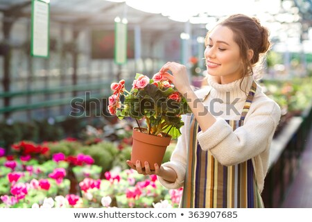 Charming happy young woman florist taking care of blooming begonia Stock photo © deandrobot