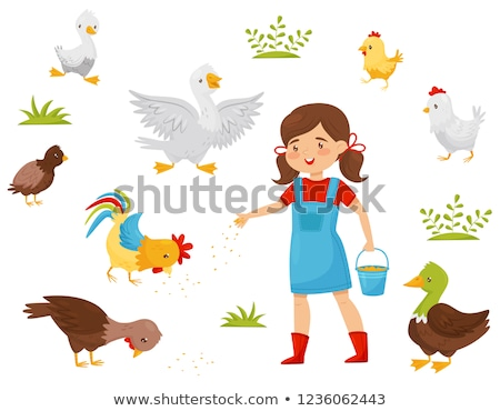 girl feeding birds stock photo © vg