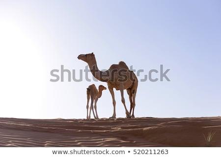 Tevék szeretet illusztráció természet pár sivatag Stock fotó © adrenalina