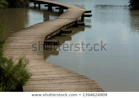 Wooden pathway across forest Stock photo © mahout
