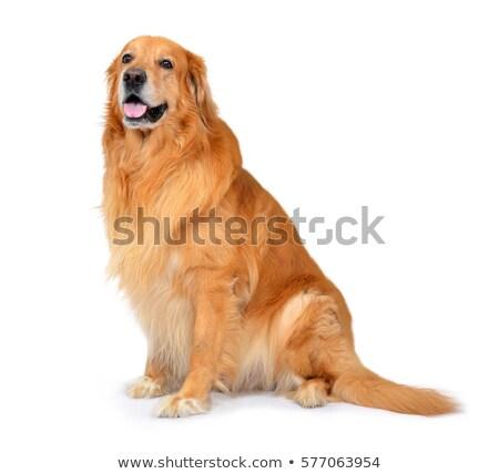 oturma · beyaz · köpek · siyah - stok fotoğraf © vauvau
