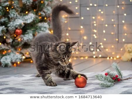 Noel · kedi · resim · sevimli · siyah · beyaz - stok fotoğraf © lightsource