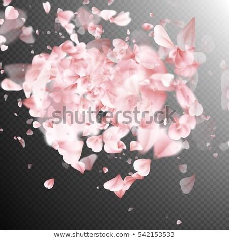 sakura · szirmok · fehér · eps · 10 · vektor - stock fotó © beholdereye