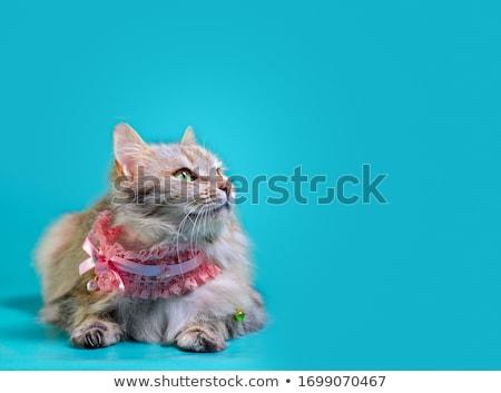 Carroty cat Stock photo © Silanti