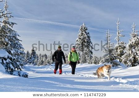 boldog · nő · kirándulás · sétál · kutya · hegyek - stock fotó © blasbike