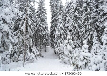 свежие нетронутый снега зима земле белый Сток-фото © sarahdoow