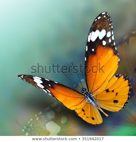 Symmetrical pattern of blue and orange butterflies Stock photo © blackmoon979