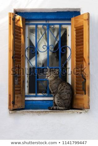 Cat seating on a window age Stock photo © Lana_M