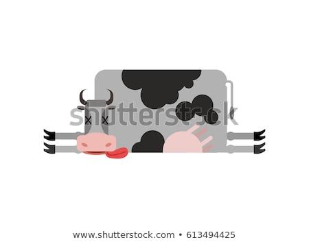 Dead cow. Farm animal dead. Corpse cattle Stock photo © popaukropa