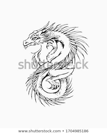 contorno · dragão · esboço · branco · preto - foto stock © liolle