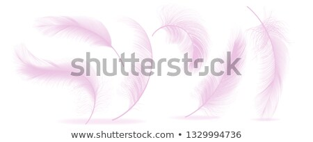 Pink Feathers Set Vector. Different Falling Fluffy Twirled Feathers. Healthy Sleep, Dreams. Isolated Stock photo © pikepicture