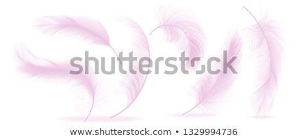 孔雀 · 装飾的な · 美しい · 手描き · 詳しい · 実例 - ストックフォト © pikepicture