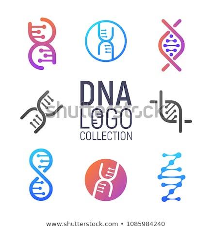 Tudomány nap biológia DNS illusztráció absztrakt Stock fotó © cienpies