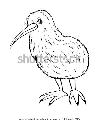 Hayvan kivi kuş örnek doğa Stok fotoğraf © colematt